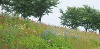 花と緑に包まれて - Zen おりおりの記