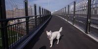 鶴見川さまさま - 小太郎の白っぽい世界
