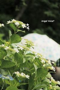 鎌倉旅2017~雨降り~ - Angel Voice*