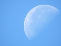 見上げれば月 - 西多摩探鳥散歩
