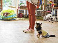 犬のしつけ方教室 6/15 - SUPER DOGS blog