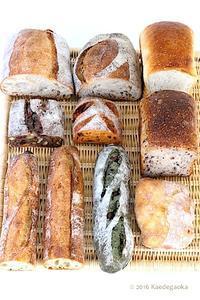 <報告>第3回みんなでパンを楽しむ会 - おうちパン教室楓ケ丘