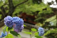 山寺の紫陽花・1♪ - happy-cafe*vol.2