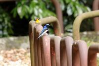 山の鳥さんたち♪ - happy-cafe*vol.2