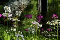 くりんそう咲く水辺 - 季節のおくりもの