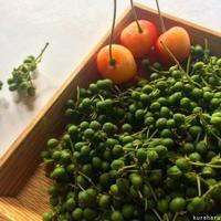 日本最古のスパイス:青山椒でチャイを作る - ココロとカラダは大事な相方 アーユルヴェーダ案内人・くれはるのブログ