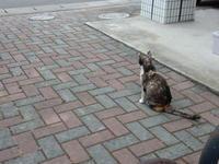 開放Day - 愛犬家の猫日記