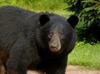 おい!熊が出たぞ - Changun-kun
