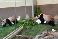 2017年6月 白浜パンダ見隊 その5 - ハープの徒然草