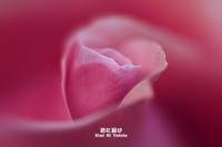 薔薇の溜息 VOL.02 - 君に届け