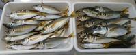 東京湾で金鯵釣り♪ - オール電化生活!カノンとキアと猫ちゃんと愉快な仲間