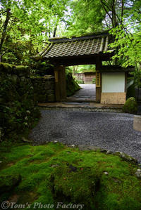 新緑の高山寺石水院 - Tomの一人旅~気のむくまま、足のむくまま~