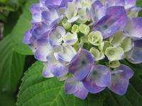 紫陽花 - 「にゃん」の針しごと