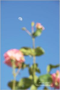 青空と薔薇と白いお月さま - It's only photo