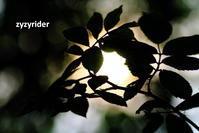 リーフサークル - ジージーライダーの自然彩彩