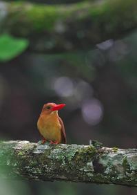 遠征 5 - 今日も鳥撮り