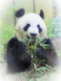 6月18日(日) 念願の一枚 - ほのぼの動物写真日記