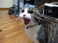 【猫】シャーっと - 人生を楽しくイきましょう!