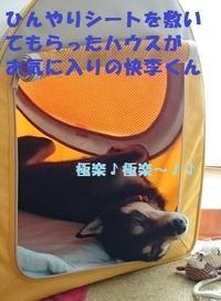 咲助(現 快李)くん、正式譲渡のご報告♪♪ - もももの部屋(家族を待っている保護犬たちと我家の愛犬のブログです)