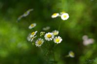 四季の森公園の花々 No1 - N.Eの玉手箱