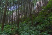今日の日和田山 - デジカメ写真集