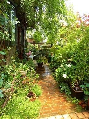 今朝の庭から - mr&mrs kajiの小さなバラの庭
