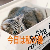 にゃんこ劇場「相席希望者」 - ゆきなそう  猫とガーデニングの日記