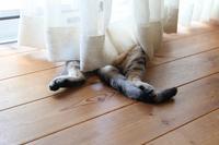 【本日のどらねこハリー】 大股開いて昼寝する怪しいおっさんハリーなニョ。 - ツルカメ DAYS