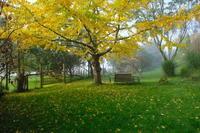 霧の朝に/ Foggy Morning in My Garden - アメリカからニュージーランドへ