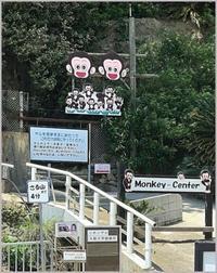 淡路島縦断観光2 モンキーセンター - つれづれなるままに