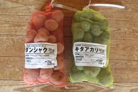 ジャガイモの生長&収穫作業 - 千葉県いすみ環境と文化のさとセンター