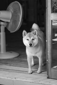 sakura (4cut) -     ~風に乗って~    Present