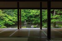 新緑の蓮華寺 - ぴんぼけふぉとぶろぐ2