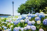 あじさい散歩 八景島シーパラダイス - Ryoの横濱Life Timeline