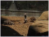 千葉市動物公園‐1   081) - 趣味の写真 ~オリンパスE-M1MarkⅡとE-M1、E-5とたまにフジフィルムXZ-1も使っています。~