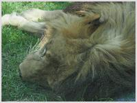 千葉市動物公園‐2   082) - 趣味の写真 ~オリンパスE-M1MarkⅡとE-M1、E-5とたまにフジフィルムXZ-1も使っています。~