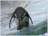 千葉市動物公園‐3   083) - 趣味の写真 ~オリンパスE-M1MarkⅡとE-M1、E-5とたまにフジフィルムXZ-1も使っています。~