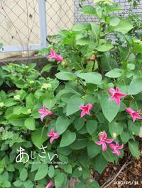 紫陽花とカマキリ - yamatoのひとりごと