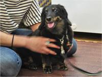 ドッグマッサージ 6/18 - SUPER DOGS blog