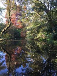 結構好きです小石川植物園 - 日々時々旅