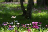 花園 - 季節のおくりもの