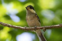 ヤマガラの幼鳥に遊んでもらった - うちのまわりの自然新聞