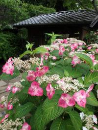 梅雨の鎌倉を歩きました。(海蔵寺) - ご無沙汰写真館