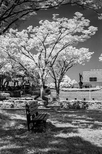 2017年6月19日 初夏の街路樹を楽しむパラレルワールドの透明人間 - Silver Oblivion