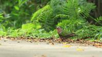 石垣島繋がりで、、、これも綺麗です! - Life with Birds 3