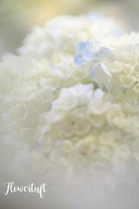 紫陽花のフラワー&フォトレッスン - 幸せのテーブル*flowertuft-flowers&tablesXphoto