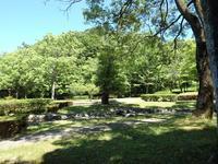 『木の実と花と呼吸根~(百年公園にて)』 - 自然風の自然風だより