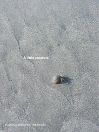 picking shells on the sands 3 (last) - ちょこってぃ