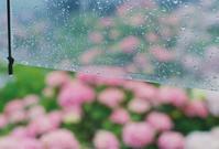 雨の日の - photomo