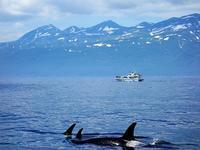 """北海道・知床で【ホエールウォッチング】②:シャチの大群に出会えたよ! (Whale watching at Rausu, Shiretoko Peninsula, Hokkaido) - """"Life in 東京"""" 日英バイリンガルブログ"""